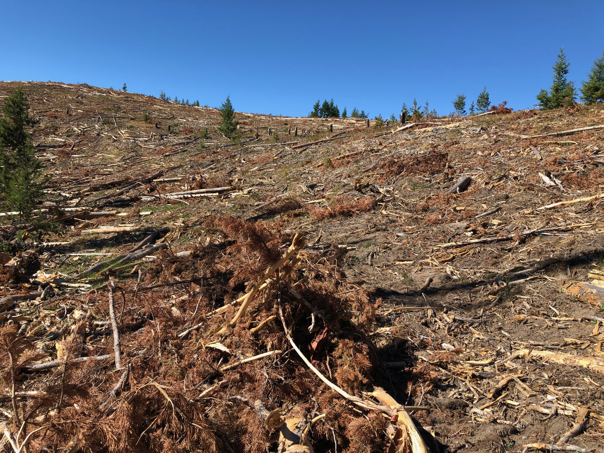 Big, bad forest clear cutting continues