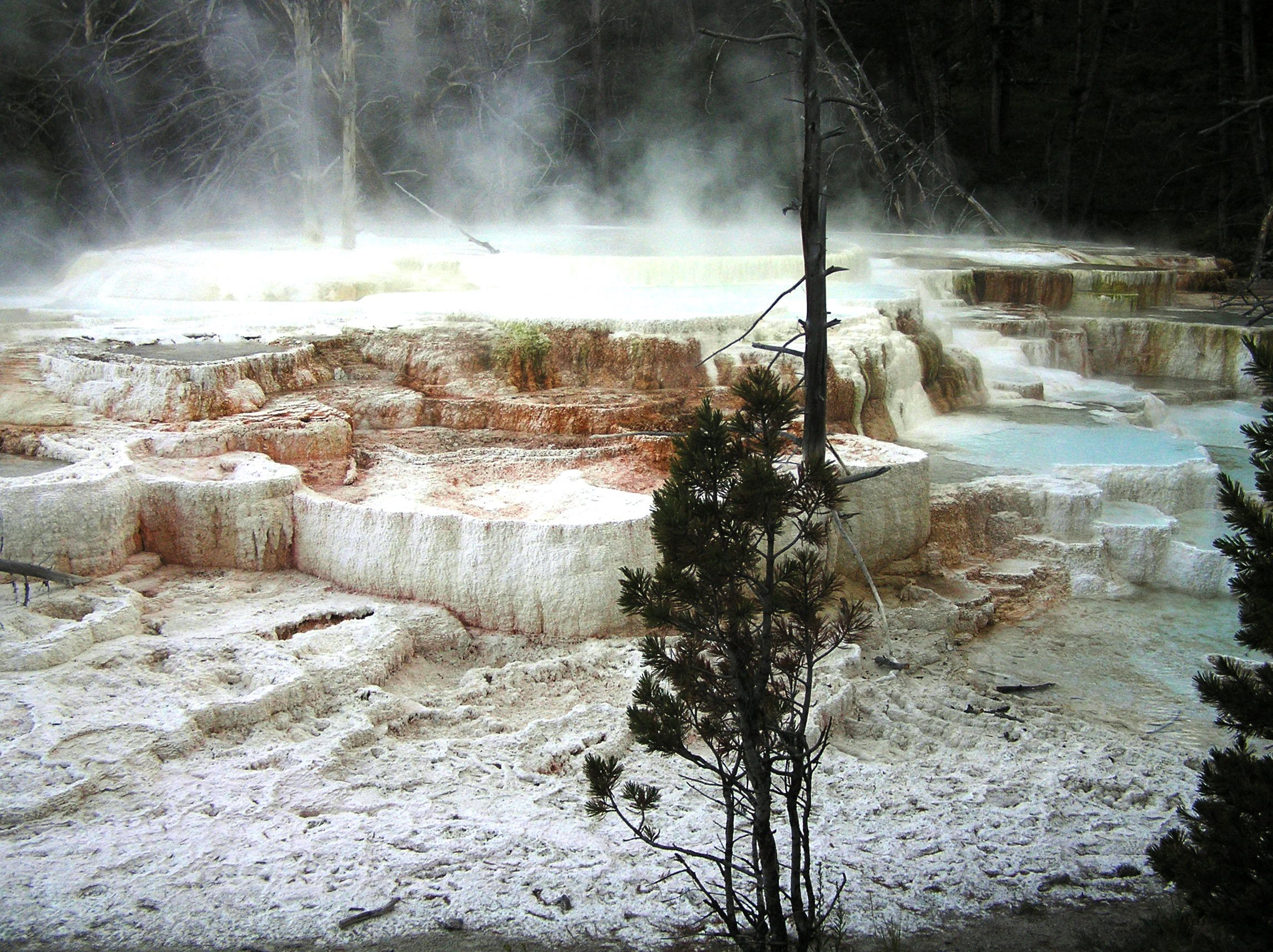 The outlier and oddity: Travertine at Mammoth Hot Springs